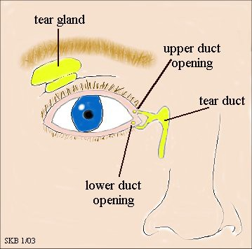 lacrimal-duct